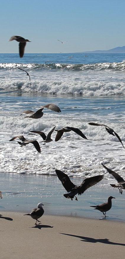 Follon Home beeld strand en meeuwen